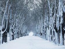 Impresión arte cartel Foto paisaje de invierno de árboles forestales túnel Frío Nieve lfmp1235