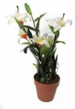 Plastic Houseplants Flowers