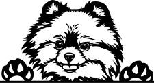 Pomeranian Peeking Dog Window Decal