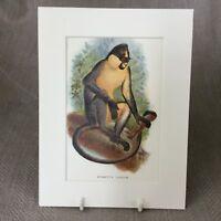 1896 Antique Imprimé Singe Everetts Langur Primates Original Victorien