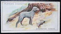 Bedlington Terrier  with Rabbit Superb     Vintage Illustrated Card  # VGC