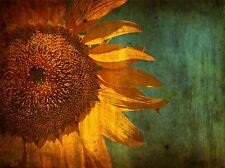 PAINTING DRAWING DESIGN FLOWER SUNFLOWER GRUNGY ART PRINT POSTER MP3768A