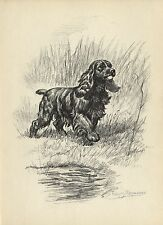 Megargee American Cocker Spaniel Dog 1953 Vintage Dog Art Print Beautiful