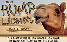 HUMP DAY Camel / Wednesday novelty plastic collectors card Drivers License