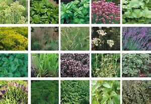 Herb & Vegetable Seeds Collection 100+ Varieties - Basil Parsley Mint Coriander