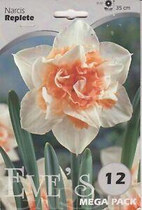 Daffodil Narcis Replete  - 12 Bulbs Per Pack 35cm