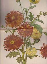 Bright Flowers  Print Young Ladies Journal Supplement October 1891 Nice Colors