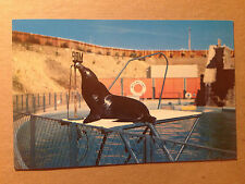 POSTCARD - SI THE POLITICIAN - MARINELAND OF THE PACIFIC  1960's  (2820)