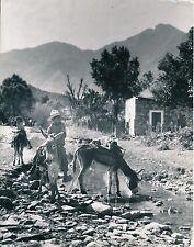 MEXIQUE c. 1950 - Jeunes Garçons à Dos D'Âne Montessey - GF 610
