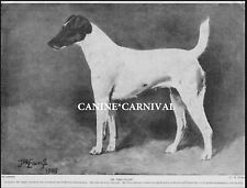 "Ch ""The Sylph"" Best Of Early Smooth Fox Terrier 1934 Vintage Dog Art Print"