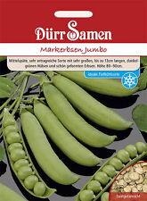 Dürr Markerbse Jumbo große Hülsen ertragreich Tiefkühlsorte Samen Erbsen 0204
