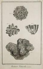 Histoire Naturelle-ORIG grabado 1760-polypiers corales acuario diving
