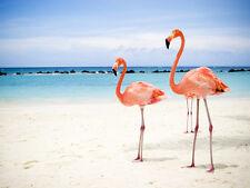 PINK FLAMINGOS ON THE BEACH * QUALITY CANVAS ART PRINT