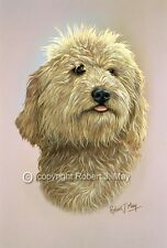 Original Labradoodle Head Study Painting by Robert J. May