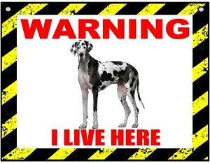 Warning I Live Here - Great Dane - Dog - Metal Sign For Indoor or Outdoor