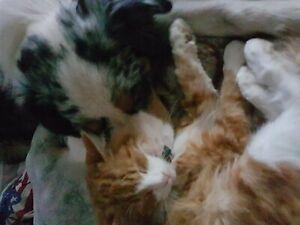 Aus Tierheilpraxis - Kräuter zur Entwurmung für Hunde und Katzen ( Wurmkur)