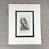 1791 Tarsier Affe Tiere Primaten Original Antik Gravierung Aufdruck 18th C