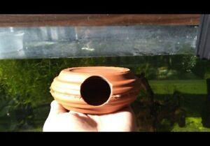 "2 Bristlenose Pleco 4""Cave/hut For Breeding -Ancistrus cichlid hut Egg hatchery"