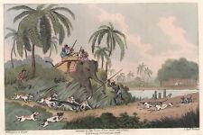 JAGD in INDIEN Kupferstich von Clark 1807 handkoloriertes Original!