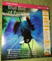 Endangered Species Animal Card - Birds - Blue Bird Of Paradise