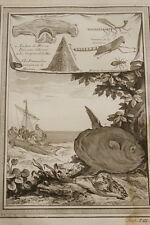 GRAVURE AFRIQUE POISSONS REQUIN MARTEAU CRIQUET FOURMI CRAPEAUD DE MER  1747