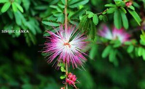 Flower Sri Lanka Nature Photo Image Landscape Photograph HD Images
