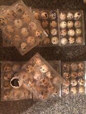 jumbo brown quail hatching eggs