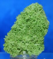 "2.9"" TOP FINE GYPSUM VAR. GREEN SELENITE FROM MT. GUNSON, AUSTRALIA (5171)"