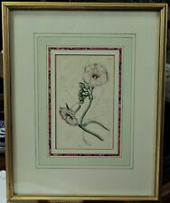 Framed Botanical Engraving By Curtis, ca 1816 - Plate 1790, Magnificent Ipomcea