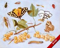 A STUDY OF BUTTERFLYS & INSECTS VAN KESSEL PAINTING ART REAL CANVAS GICLEEPRINT