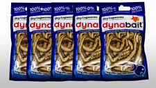 Dynabait lug/rag worms 5x  (dehydrated fishing tackle, bait, 2 years shelf life)