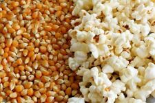 1 KG. Dried Corn Kernels for making Pop Corn! BEST Quality Imported PopCorn!