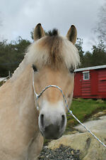 Natural Horsemanship Pressure Halter - RED  (Parelli - Monty Roberts)