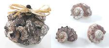 Bag of Laciniata Sea Shells Vase Filler Home Decor Purple Coastal Decor Nautical