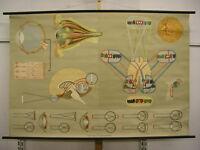 Wandbild Augenarzt Sehen Blinde Brille 170x115cm vintage eye doc wall chart~1960