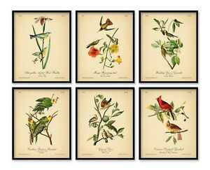 VINTAGE ART PRINTS 8x10'' Birds Prints Botanical Prints Set of 6 Home Audubon