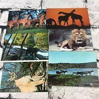 Wildlife Animal Postcards Photographs Vintage Collectors Lot Of 6
