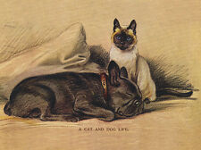 FRENCH BULLDOG CHARMING DOG GREETINGS NOTE CARD BEAUTIFUL DOG & SIAMESE CAT