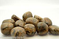 Stromatolite 25mm LG QTY3 Tumbled Stone Healing Crystal REIKI Past Life Stress