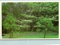 Valdosta GA Dogwood Wisteria Postcard unused (20399)