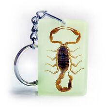 Echter Skorpion im  Schlüsselanhänger