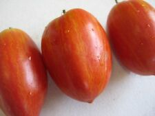 Speckled Roman Tomato 5+ seeds