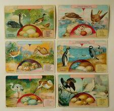 6 Kaufmannsbilder Serie 5364 Vogeleier