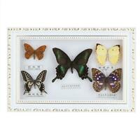 Exquisite Butterflies Insect Specimen Craft Birthday Gift Home Decor Ornament