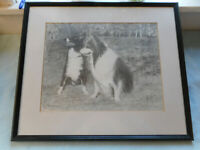 Beautiful Pencil Drawing Two Collie Dogs ( Signed)