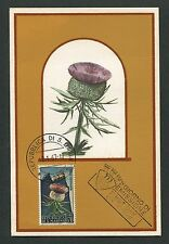 SAN MARINO MK 1967 FLORA WOLL-KRATZDISTEL MAXIMUMKARTE MAXIMUM CARD MC CM d7382