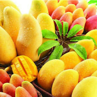 2 Stück Mango Samen Mini Baum Bonsaibaum Biologischer Früchte Hervorragend