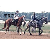 SECRETARIAT RON TURCOTTE CHARLIE DAVIS -ORIGINAL 1973 8X10 BELMONT STAKES PHOTO!
