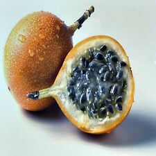 PANAMA GOLD PASSIONFRUIT SEED PASSIFLORA FRUITING SWEET HIGH YIELDING 40 SEEDS
