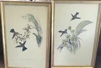 Set Of 2John Gould & Richter Humming Bird Original Hand Colored Lithograph Frame